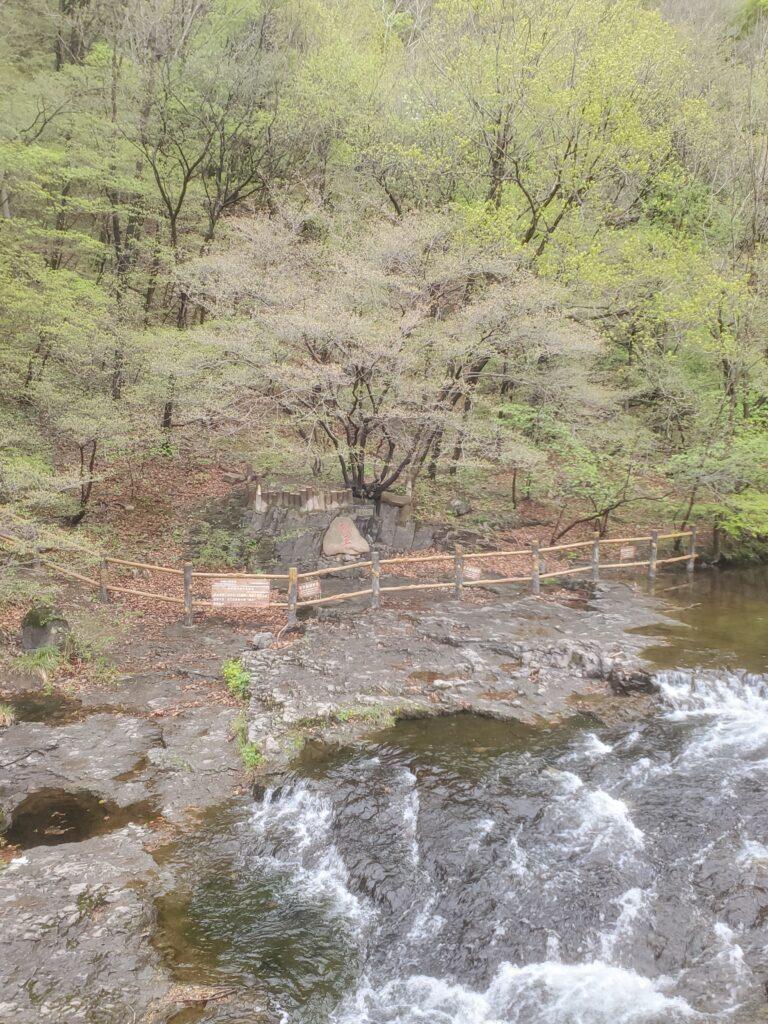 関門山国家森林公園の柳王