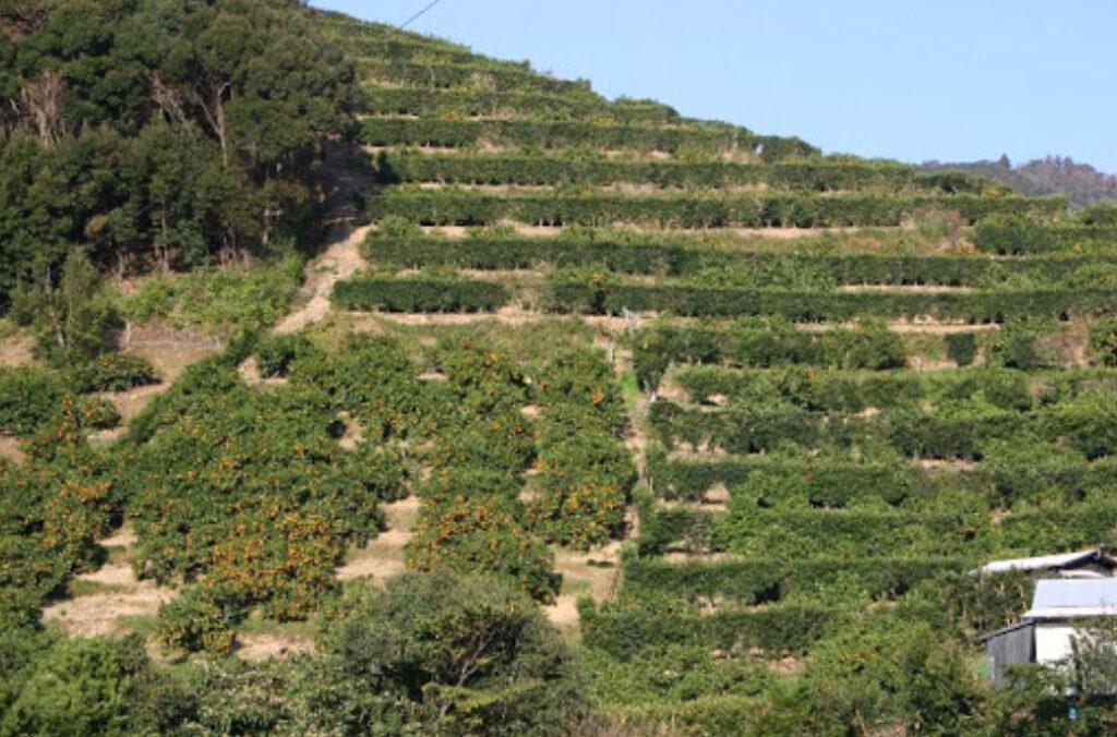 石垣の斜面にある畑