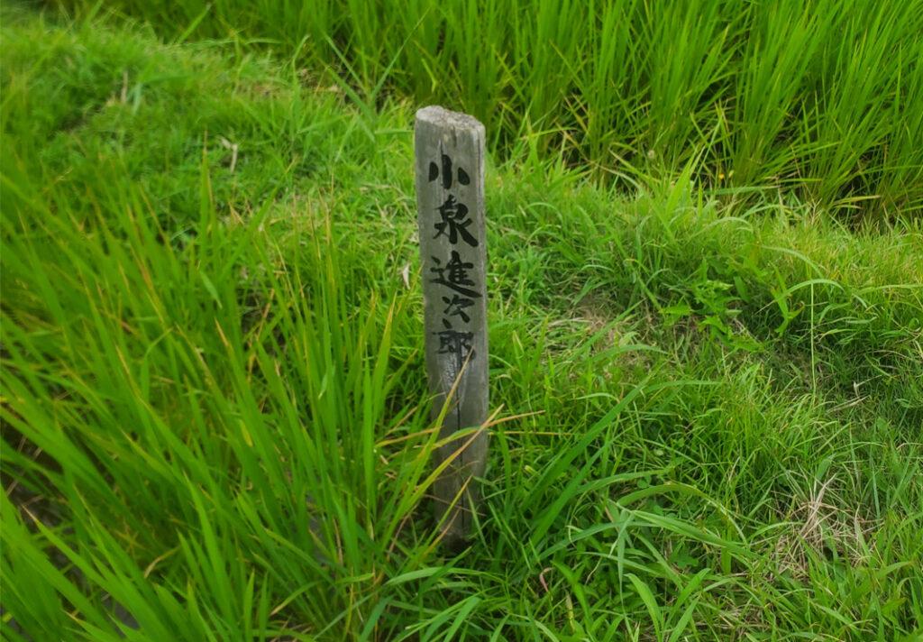 小泉進次郎の千枚田